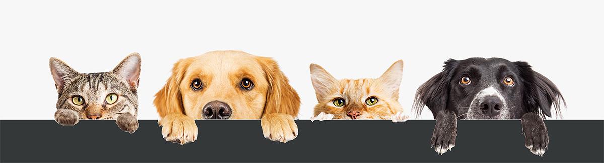 Mascotas veterinario madrid fuenlabrada