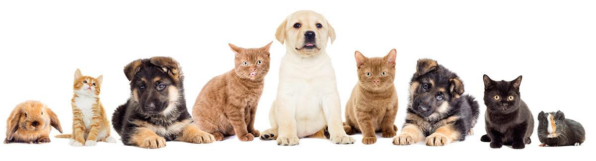Mascotas clínica veterinaria loranca fuenlabrada