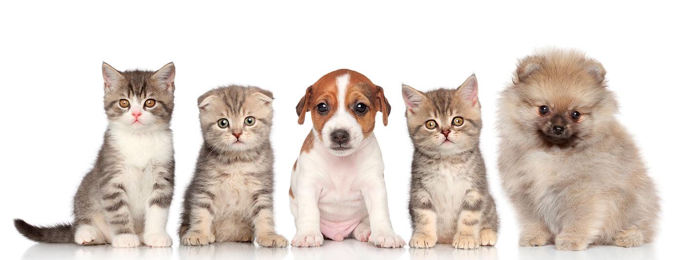 veterinario en fuenlabrada loranca mascotas